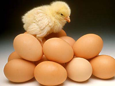 吃蛋的危害