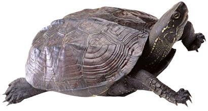 乌龟感恩 惊呆卖龟人