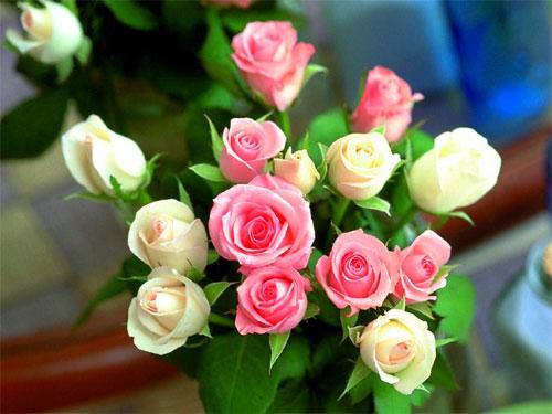 玫瑰与乞丐