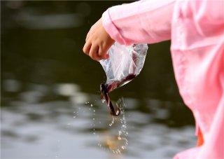 为什么藏族人不吃鱼