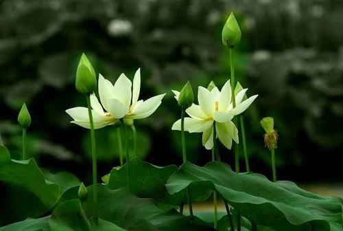一朵可以辨别是人还是鬼的红花    作者:星云大师 - 清 雅 - 清     雅博客
