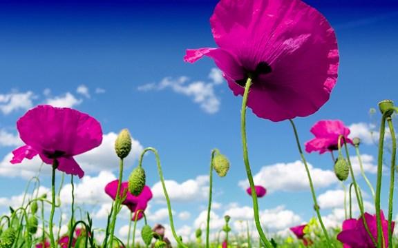 一朵可以辨别是人还是鬼的红花