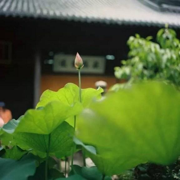 释迦牟尼佛也是念佛成佛的吗